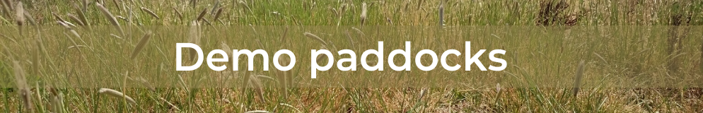 Feathertop Rhodes grass - Demo paddocks