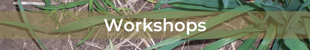Feathertop Rhodes grass - Workshops